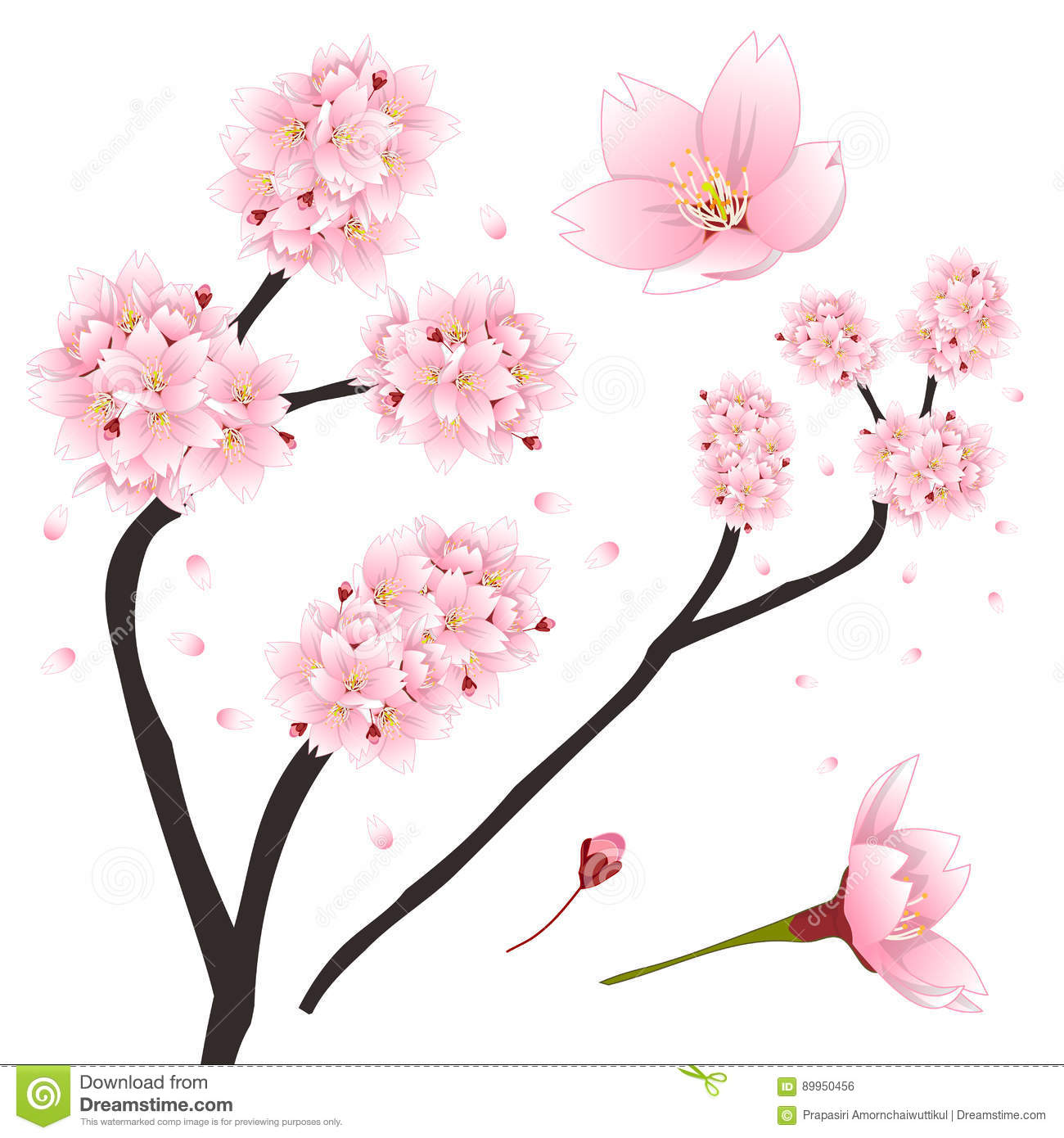 Prunus Blossom clipart #11, Download drawings