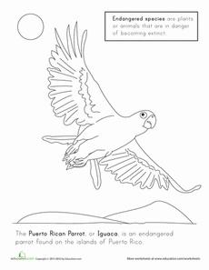 Puerto Rico coloring #4, Download drawings