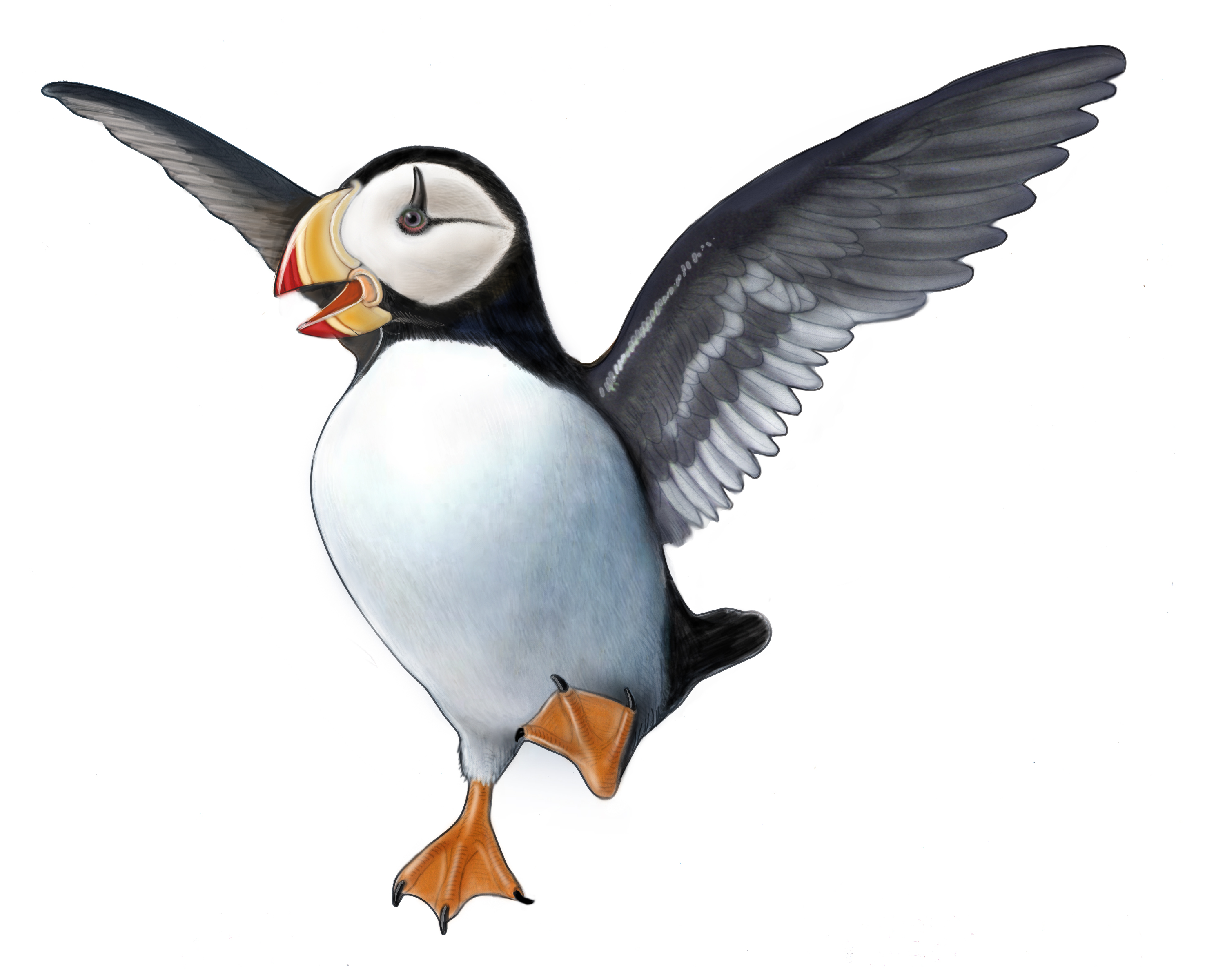 Puffin clipart #20, Download drawings