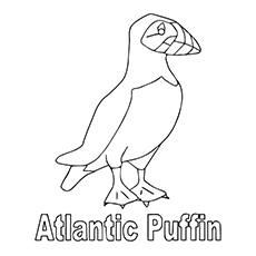 Puffin coloring download puffin coloring for Puffin coloring pages to print