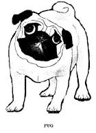Pug coloring #2, Download drawings