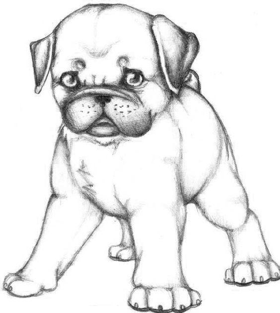 Pug coloring #4, Download drawings