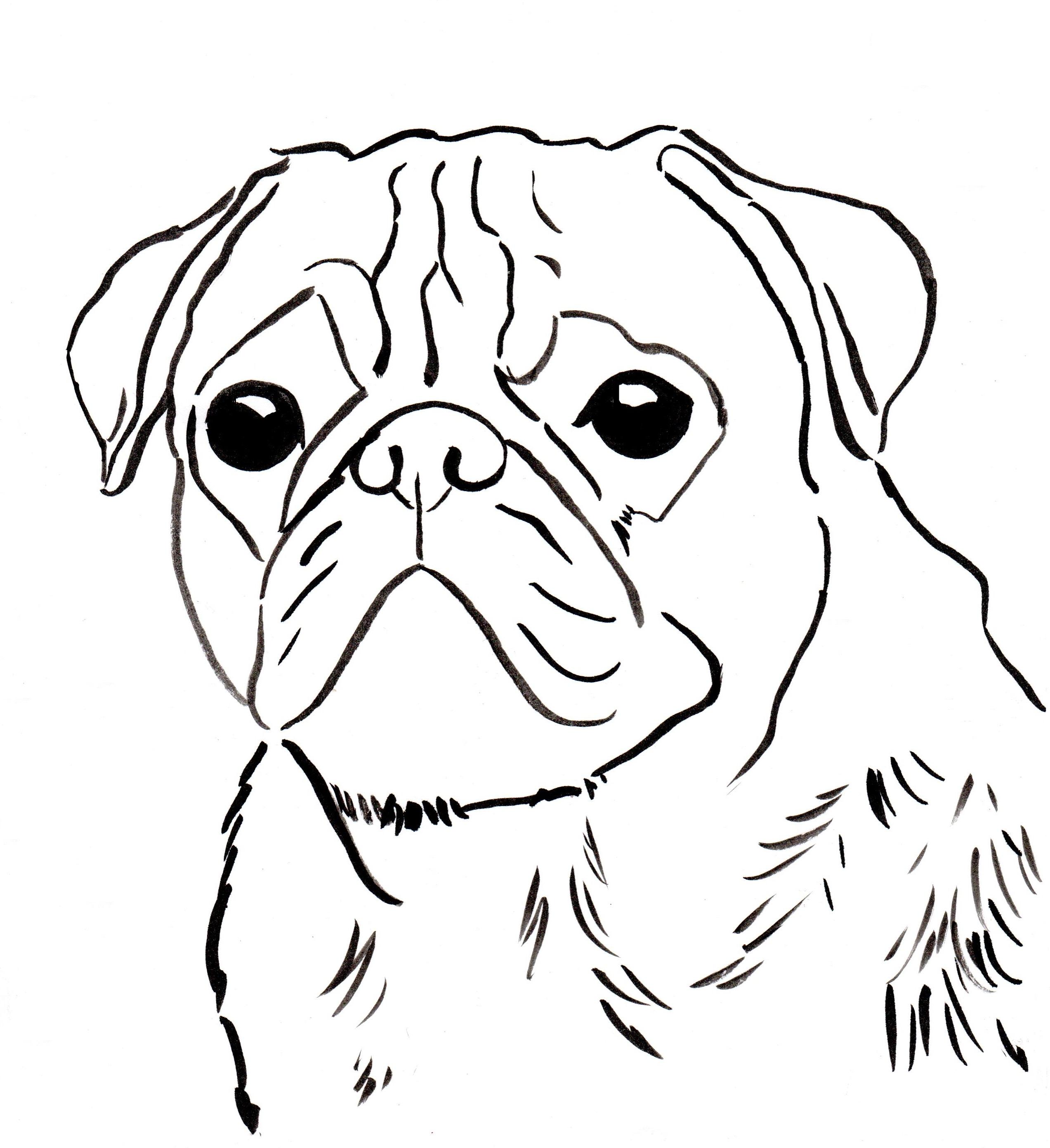 Pug coloring #1, Download drawings