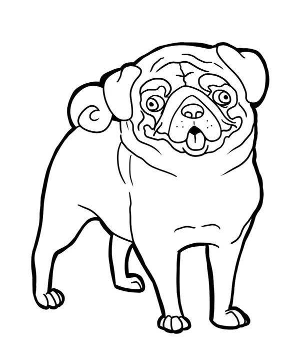 Pug coloring #8, Download drawings