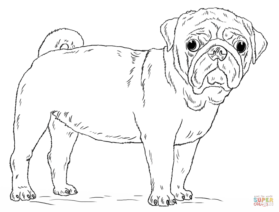 Pug coloring #11, Download drawings