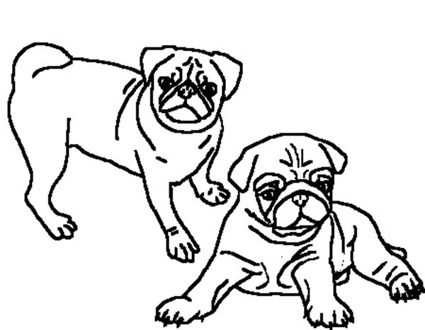 Pug coloring #13, Download drawings