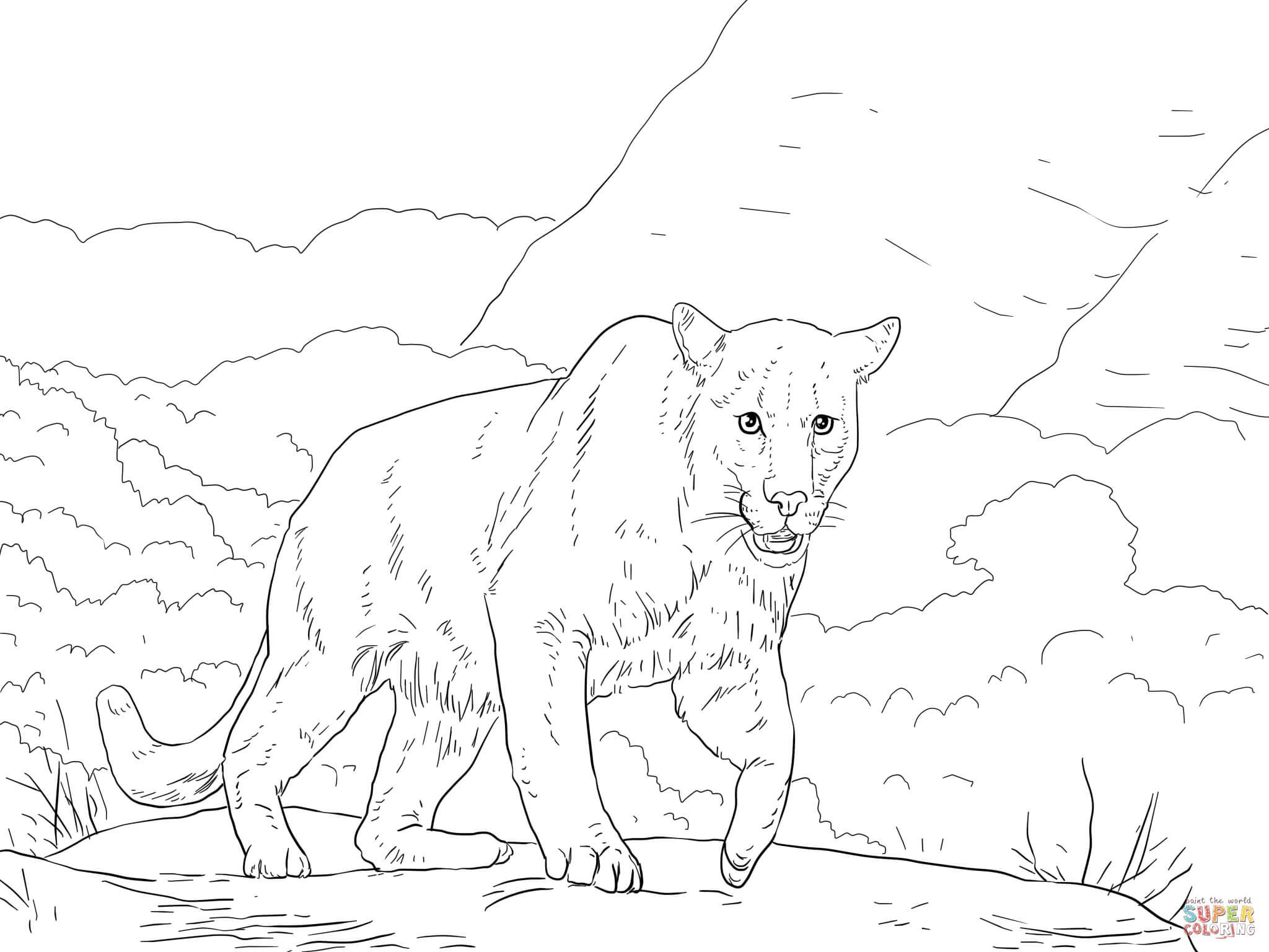 Puma coloring #7, Download drawings