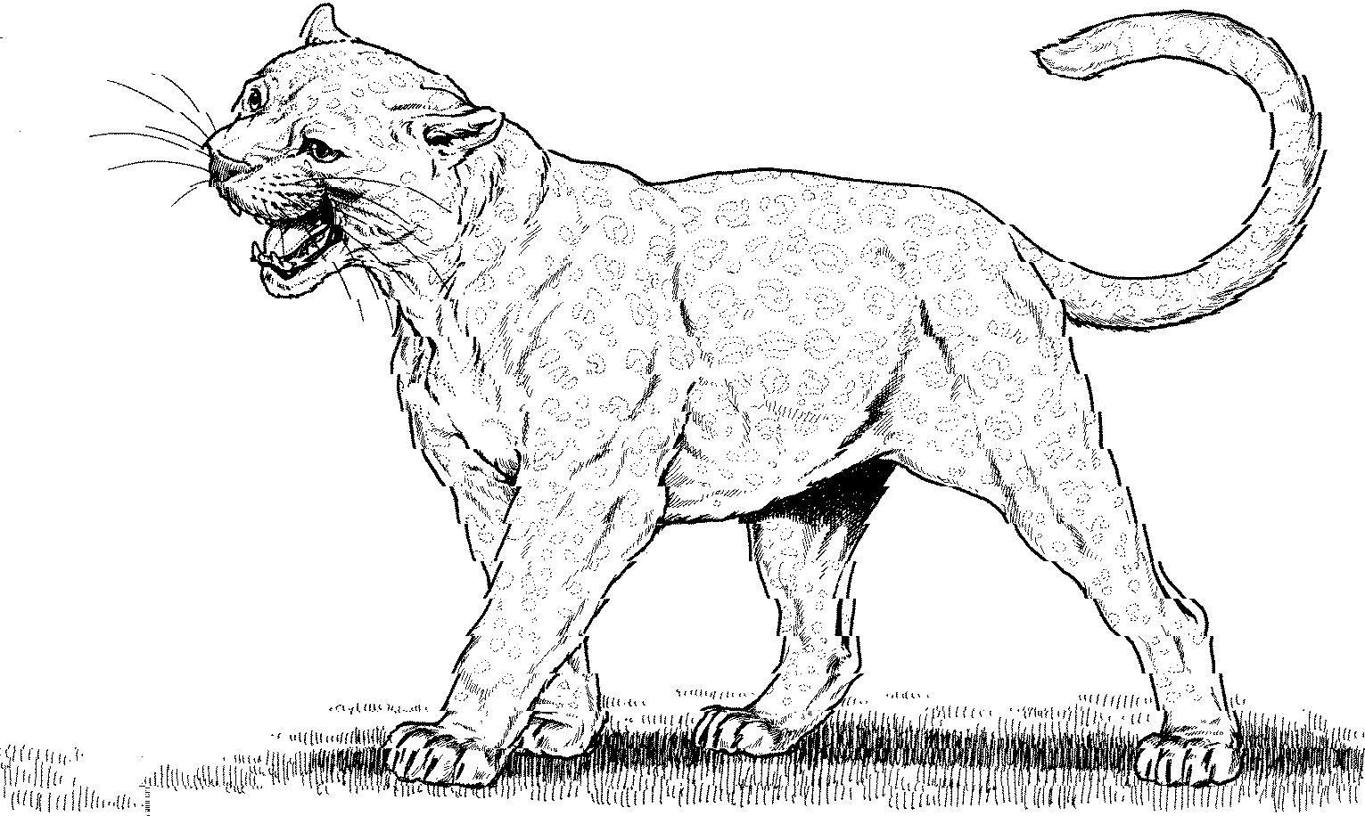 Puma coloring #4, Download drawings