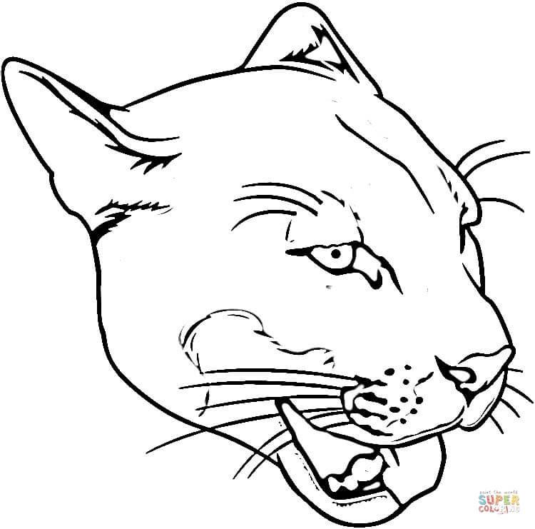 Puma coloring #15, Download drawings