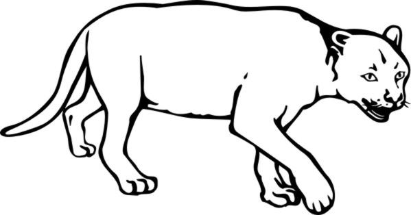 Puma coloring #1, Download drawings