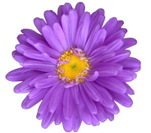 Purple Flower clipart #1, Download drawings