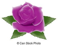 Purple Rose clipart #15, Download drawings