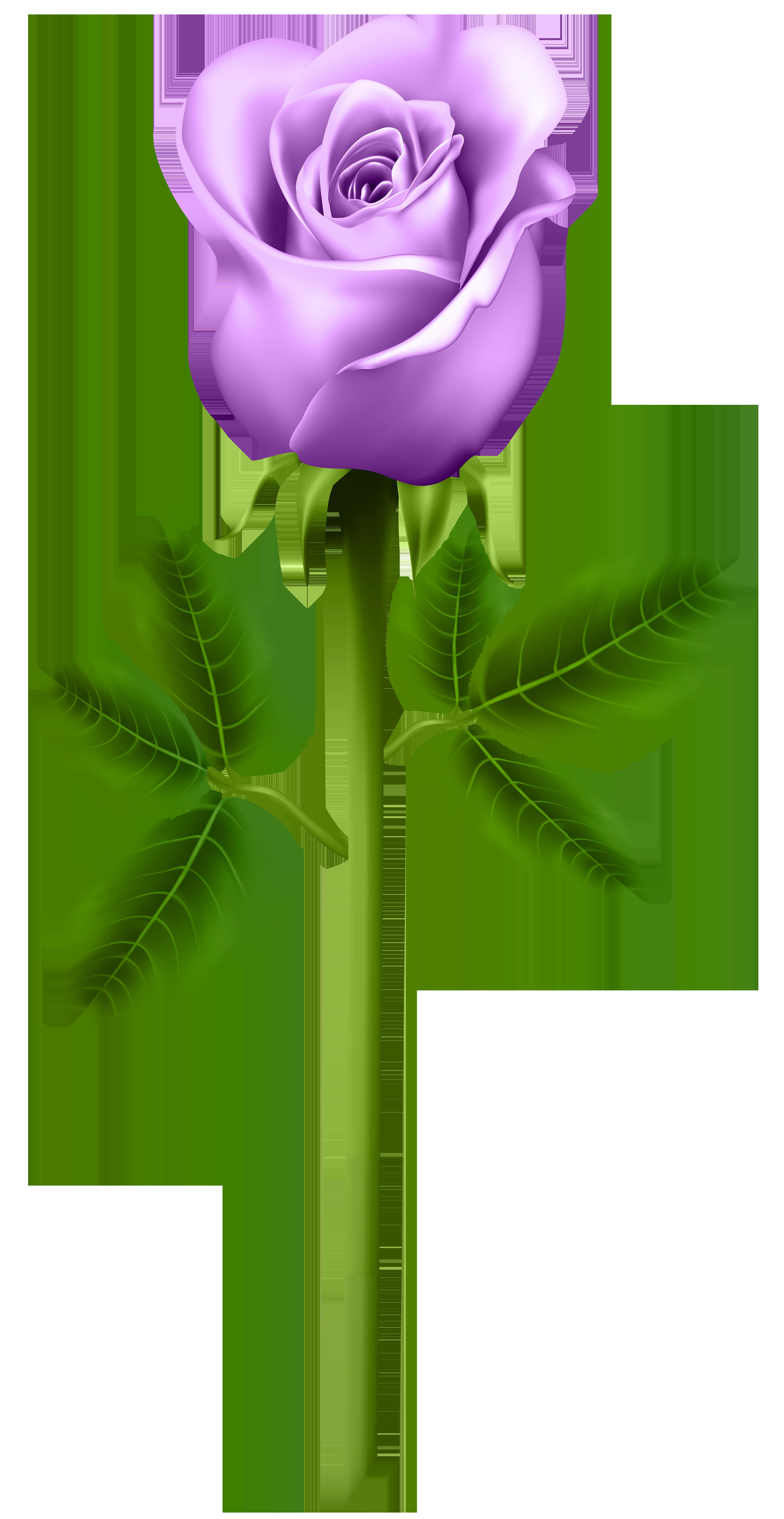 Purple Rose clipart #3, Download drawings