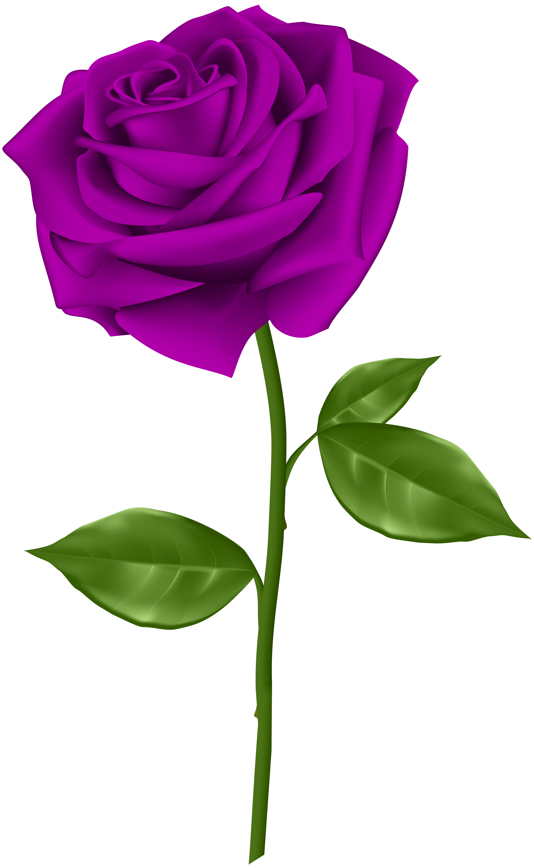 Purple Rose clipart #4, Download drawings
