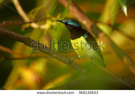 Purple-rumped Sunbird clipart #14, Download drawings