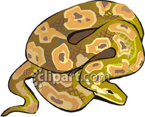 Python clipart #5, Download drawings