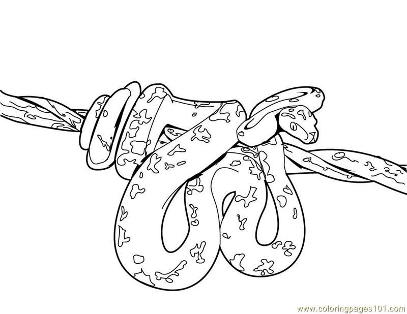 Tree Snake coloring #5, Download drawings