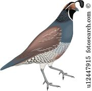 Quail clipart #12, Download drawings