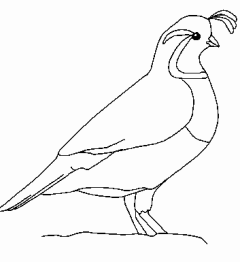 Quail clipart #7, Download drawings