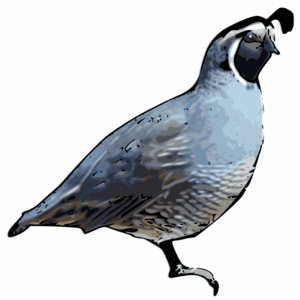 Quail clipart #6, Download drawings