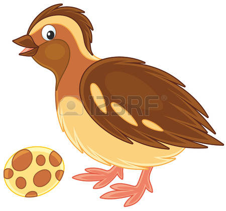 Quail clipart #11, Download drawings