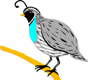 Quail clipart #19, Download drawings
