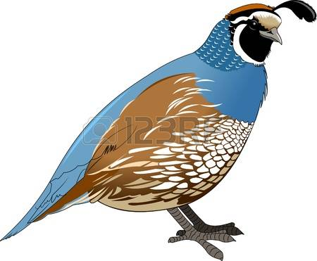 Quail clipart #14, Download drawings