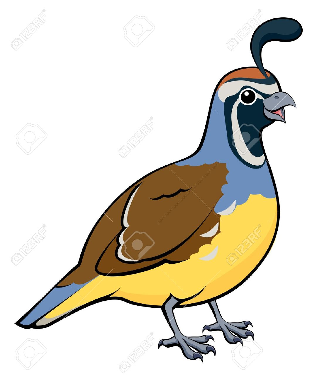 Quail clipart #13, Download drawings