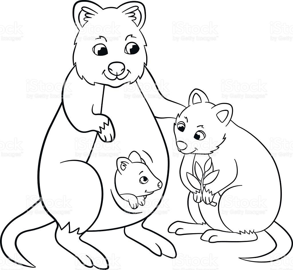 Quokka coloring #6, Download drawings