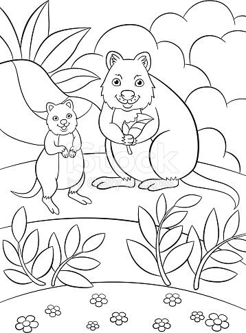 Quokka coloring #12, Download drawings