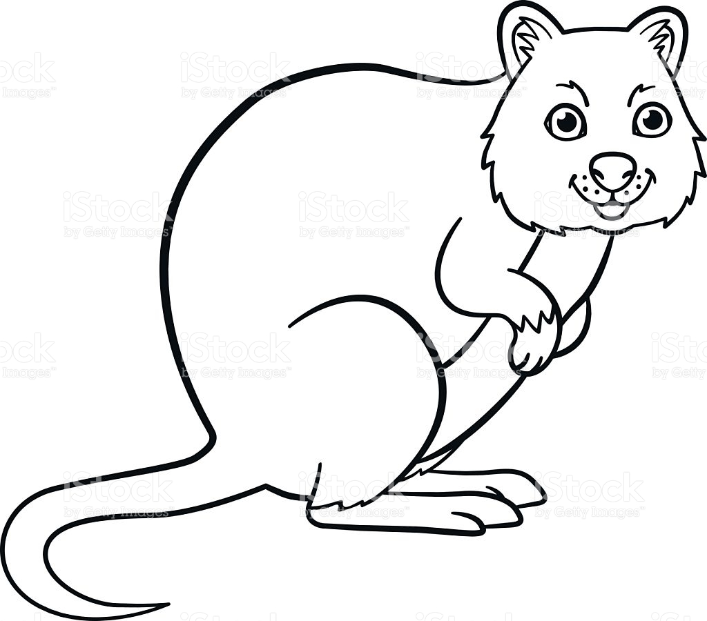 Quokka Coloring, Download Quokka Coloring For Free 2019