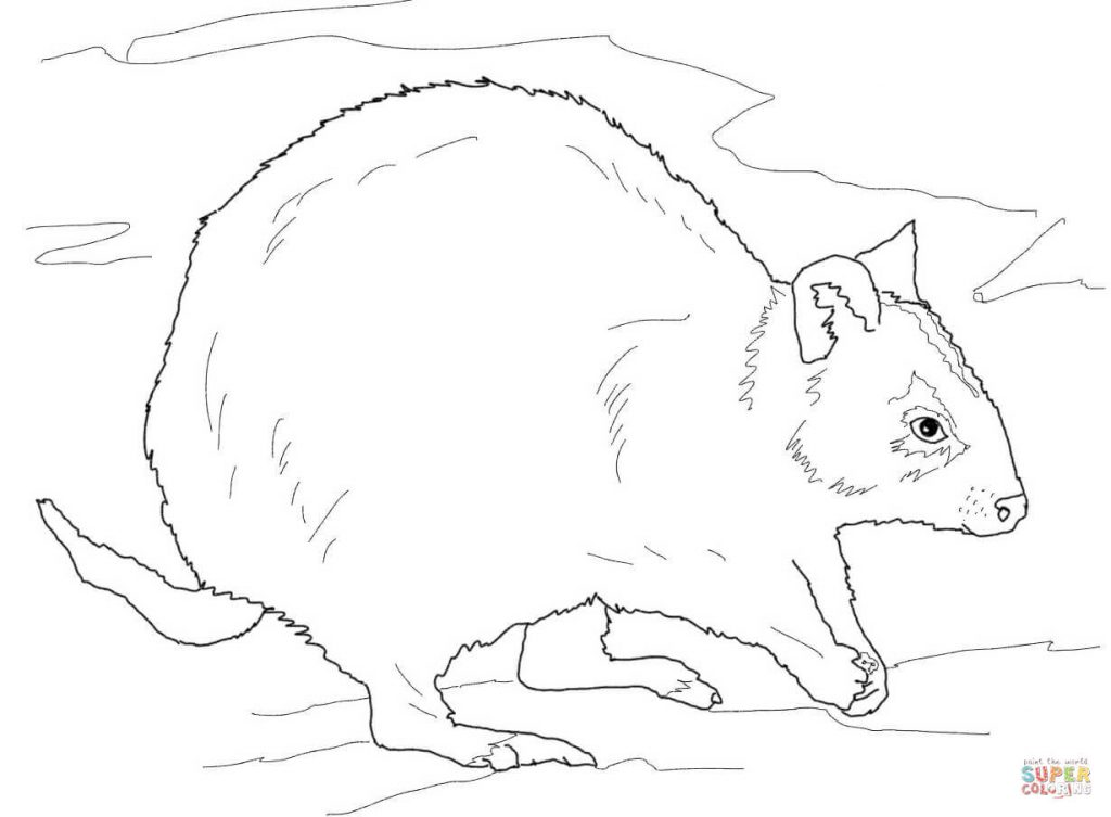 Quokka coloring #2, Download drawings