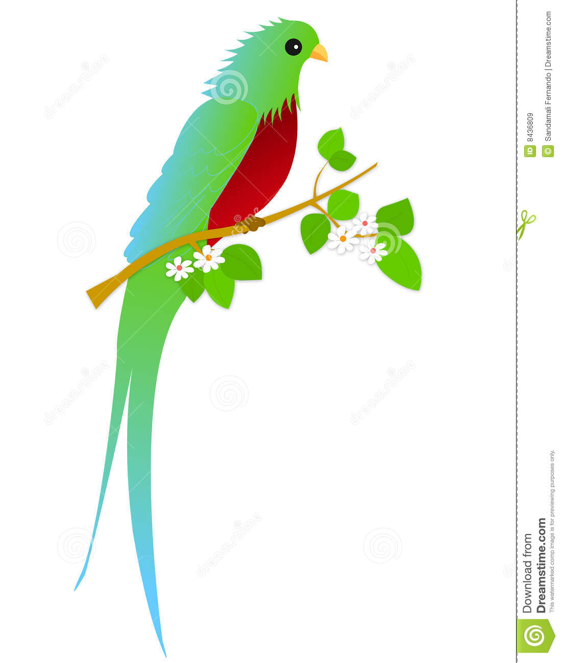 The Quetzal Of Guatamala clipart #16, Download drawings