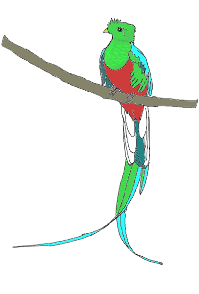 Quetzal  clipart #11, Download drawings