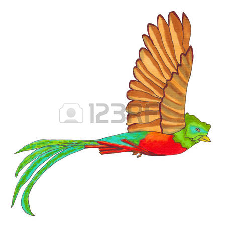 Quetzal  clipart #6, Download drawings