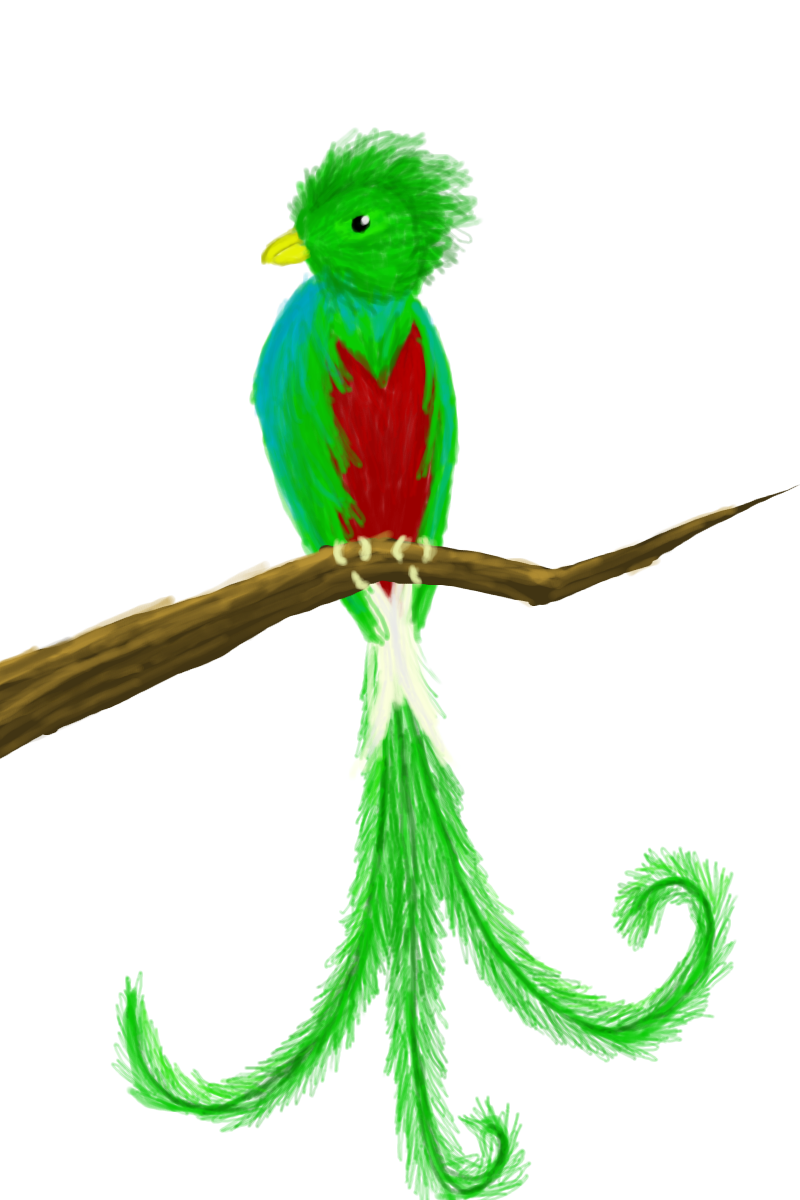 Quetzal  clipart #2, Download drawings