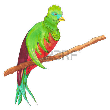 Quetzal  clipart #4, Download drawings