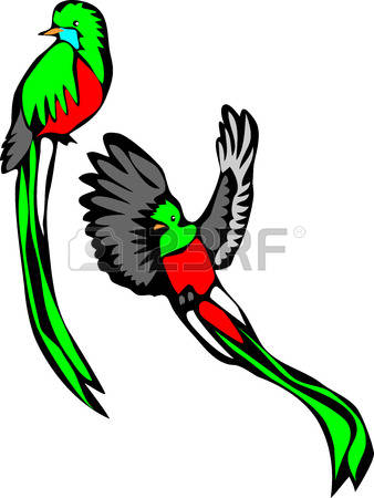 The Quetzal Of Guatamala clipart #17, Download drawings