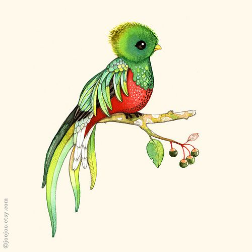 Quetzal  clipart #7, Download drawings