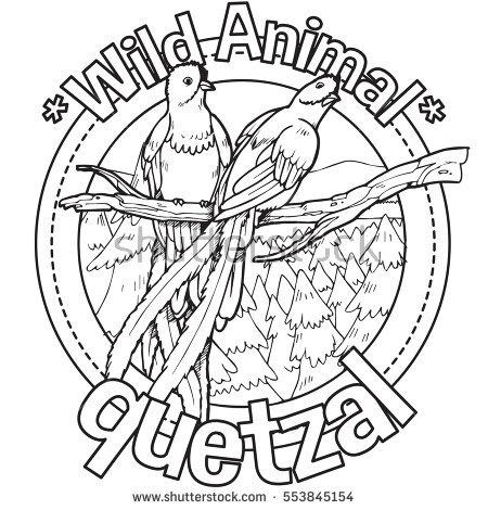 Quetzal Coloring Download Quetzal Coloring