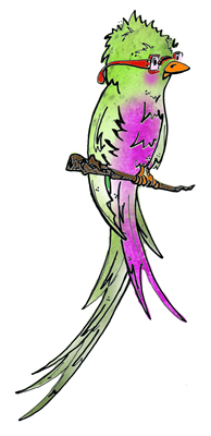 Quetzal Of Guatemala clipart #12, Download drawings