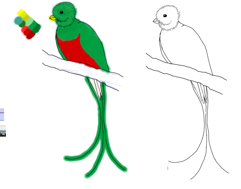 Quetzal Of Guatemala clipart #6, Download drawings