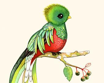 The Quetzal Of Guatamala clipart, Download The Quetzal Of ...