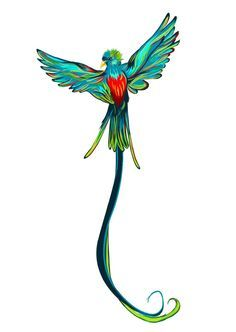 Quetzal Of Guatemala clipart #11, Download drawings