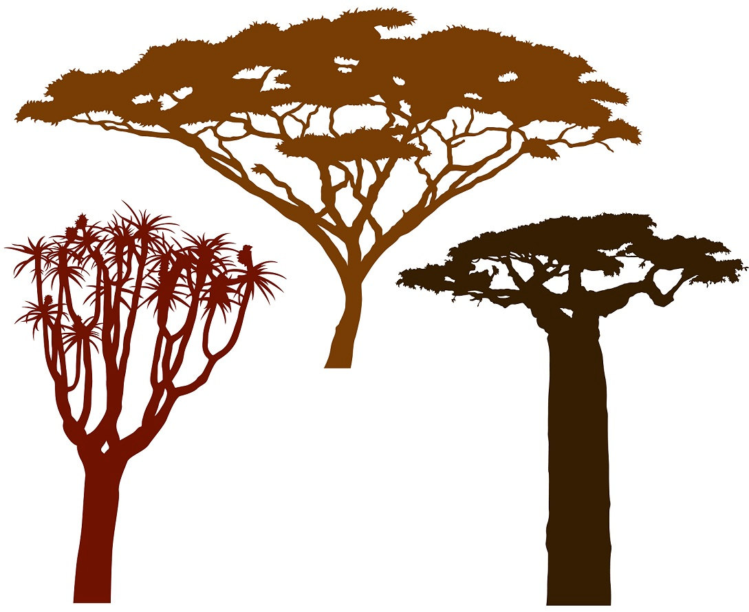 Quiver Tree clipart #19, Download drawings