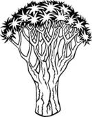 Quiver Tree clipart #18, Download drawings