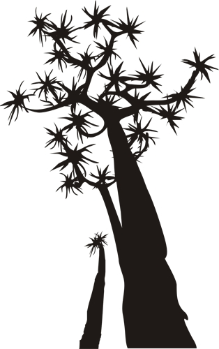 Quiver Tree clipart #13, Download drawings