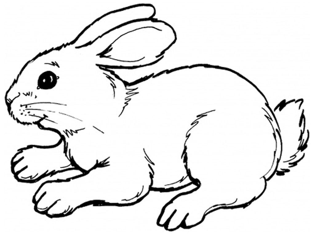 Rabit clipart #16, Download drawings