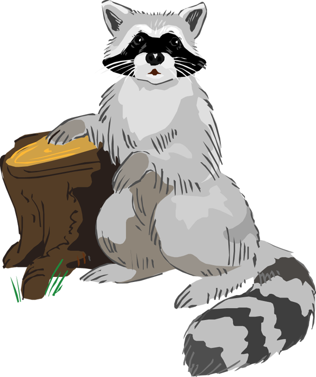 Racoon clipart #19, Download drawings