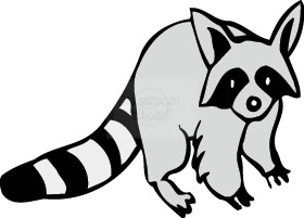 Racoon clipart #7, Download drawings